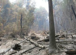 complex-fires-still-eating-acreage-six-rivers-national-forest