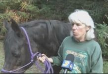 horse-rescued-after-falling-hole
