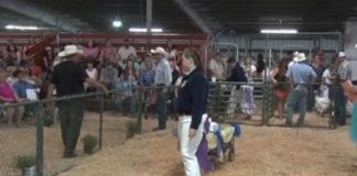 sunday-ferndale-fair-and-ffa-grand-champions