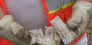 volunteers-find-over-100-needles-during-eureka-waterfront-cleanup